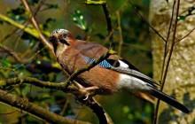 COM GAUDIR DELS OCELLS LLIURES A VALLDOREIX a Valldoreix tenim més de 50 espècies d'ocells, descobreix-les